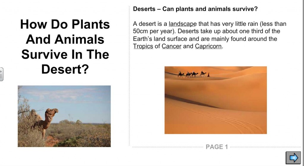 how do animals survive in the desert