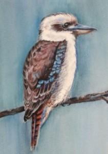 aussie_birds_kookaburra