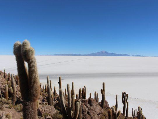 Landscape Art - Cactus Island